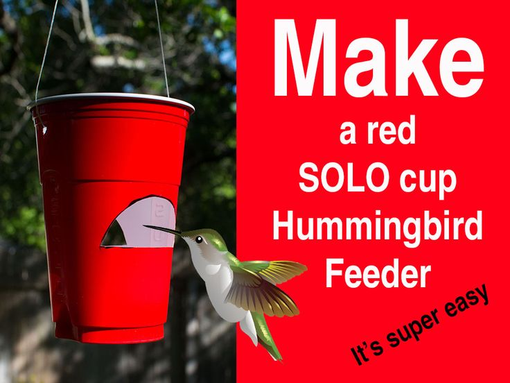 Need a fast and cheap way to attract hummingbirds to your garden? You can easily make your own DIY red SOLO cup hummingbird feeder by following these steps.