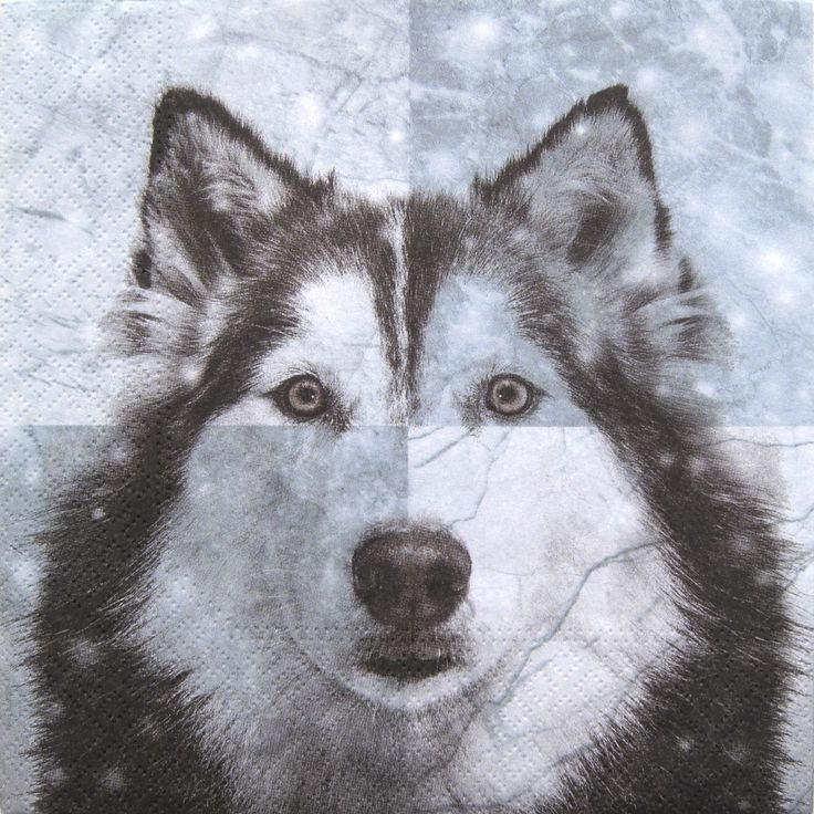 Decoupage paper napkins, Husky, Dogs, Winter, Set of 3 paper napkins, size 33x33cm (no.105) by ArsaiSupplies on Etsy