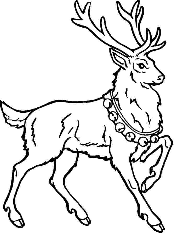 Pin By Darlene Tuggle On Christmas Deer Coloring Pages Animal