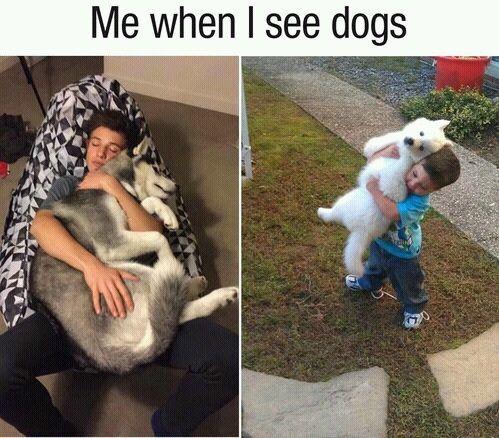 dog, cameron dallas, and hug image