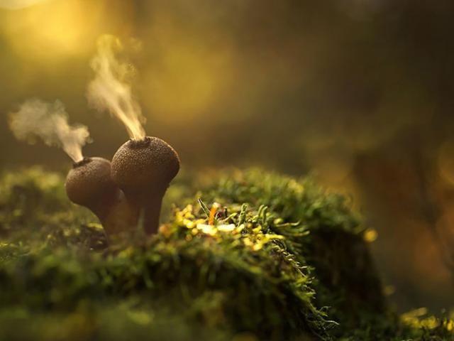 Nu de herfst voor de deur staat, duiken in het bos weer overal paddenstoelen op. Vinden we awesome. Stel je eens voor als je één van deze prachtige exemplaren tegen zou komen….
