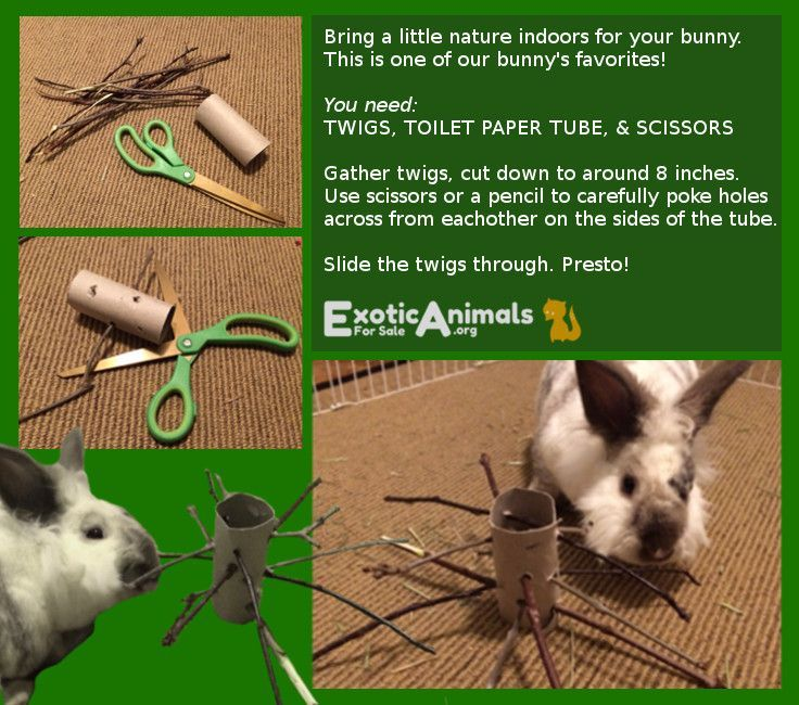 how to toilet train a rabbit uk