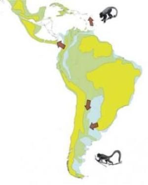 """Reconstructing the New World Monkey Family Tree: """"The Amazon Basin functioned as a reservoir of primate biodiversity."""""""