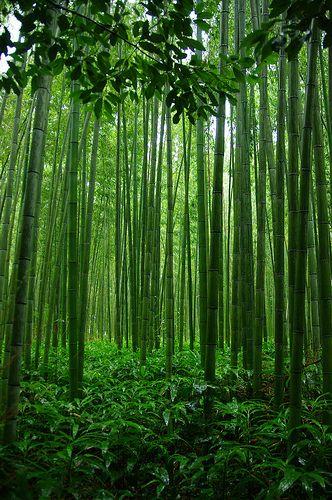 Tenryu-Ji+Shrine's+Bamboo+trail,+Arashiyama,+Kyoto,+Japan