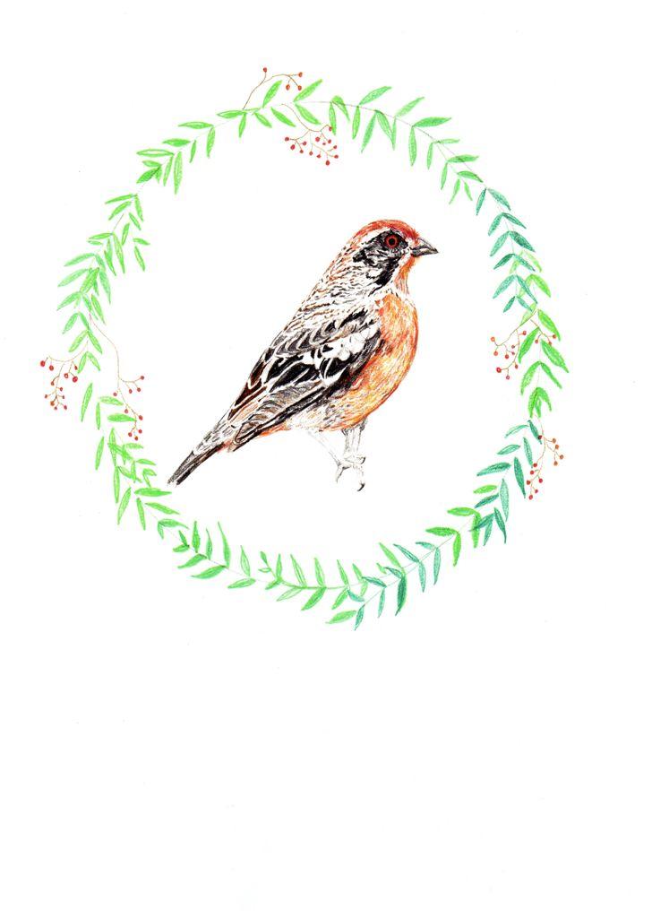 Rara. Serie flora y fauna chilena. Lápiz a color. Por Coco & Co
