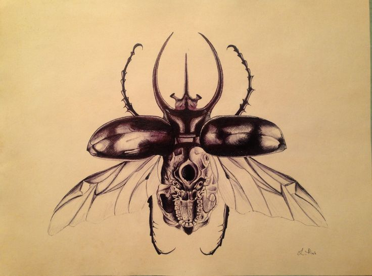 Scientific illustration. Upside down Skull Beatle. Pen on Paper by Leanie Piek