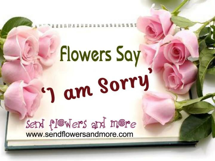 Apologize to your friends, family or dear one with bunch of Sorry Flower Bouquet. Buy lovely Sorry Flower bouquet from SendFlowersAndMore and send your apology. Say I'm Sorry with beautiful Sorry Flower Bouquet. For more: http://www.sendflowersandmore.com/sentiment/send-flowers-i-m-sorry