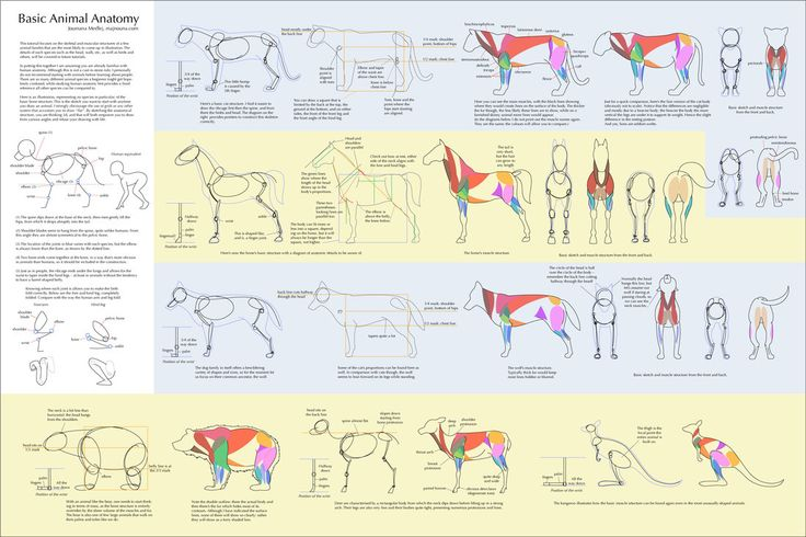 REFERENCES FOR ALL THE THINGS: (birds, feet, faces, etc). Basic Animal Anatomy by `majnouna on deviantART