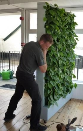 Plants moving the mobile green wall into position.