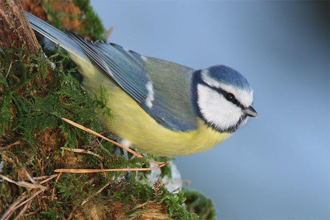 """Machen Sie mit beim Training für die """"Stunde der Wintervögel""""! Am Donnerstag liegt der Fokus auf dem Arten bestimmen. Schulen Sie Ihren Vogelexperten-Blick und bereiten Sie sich mit unserem Gewinnspiel auf die große Vogel-Zählaktion vom 5. bis 7. Januar vor."""