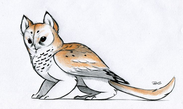 Owl Griffin color design by RobtheDoodler.deviantart.com on @deviantART