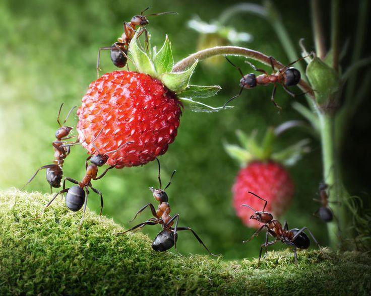 Как избавиться от муравьев в саду и дома