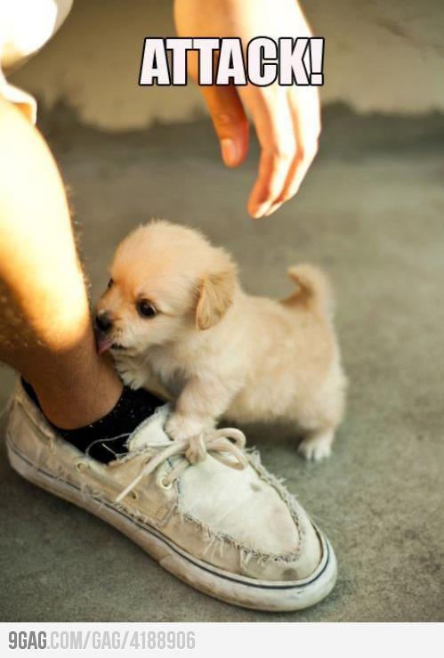 Cuteness can kill!!: Kiss, Little Puppies, Dogs, So Cute, Pet, Tiny Puppies, Socute, Animal, Golden Retriever