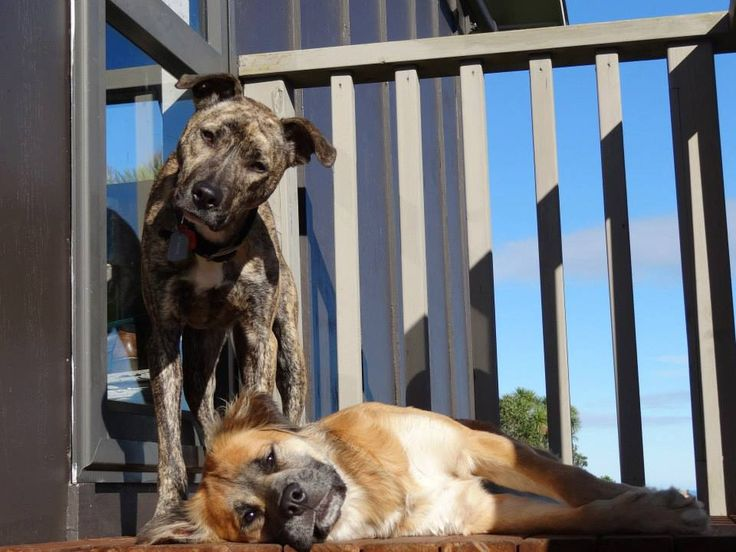 Basil is hanging out with his foster brother, eagerly awaiting his new family....