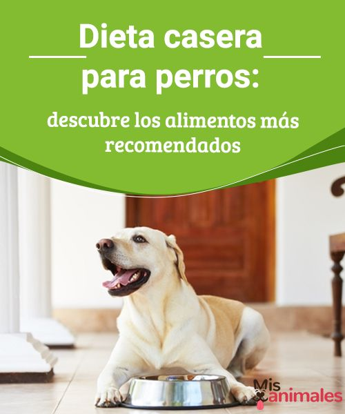 Dieta casera para perros: descubre los alimentos  Si decides alimentar a tu perro con comida preparada en casa, te dejamos algunas recomendaciones para elaborar una dieta casera para perros.