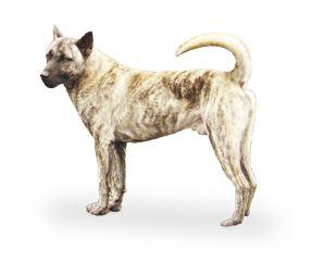 taiwan dog - Cerca con Google