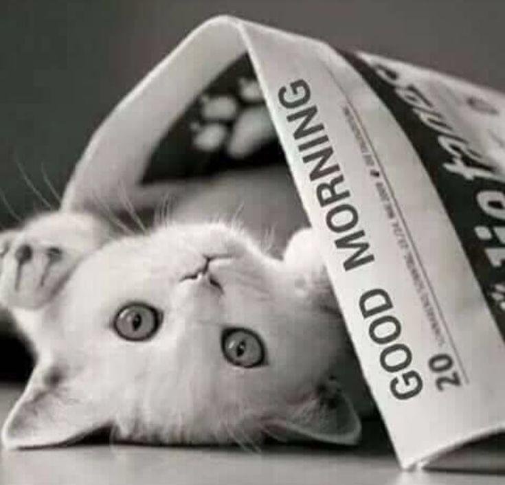 Good Morning Sunshine Rap : Best good morning images on pinterest bonjour