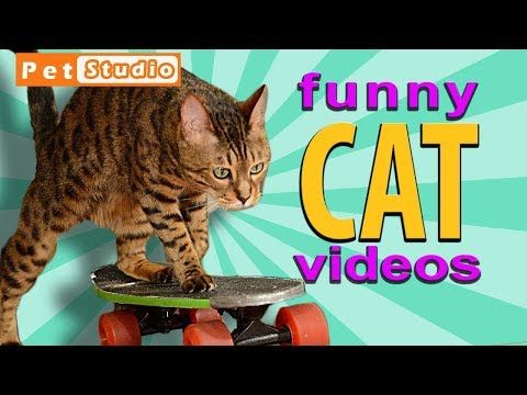 Funny videos 2018: Funny cat videos that will make you laugh so hard you cry 2018   viral-videos.live… viral-videos.live #viralvideos #viral #explor…