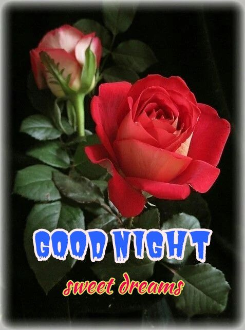 Good Night Rose Images #Roseimages #goodnight   Night
