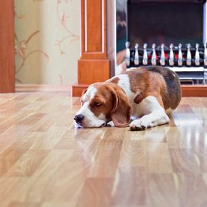 How to Get Dog Urine Smell Out of Hardwood Floors  Read more: http://www.getsmellout.com/how-to-get-dog-urine-smell-out-of-hardwood-floors/#ixzz40M4HMhEV