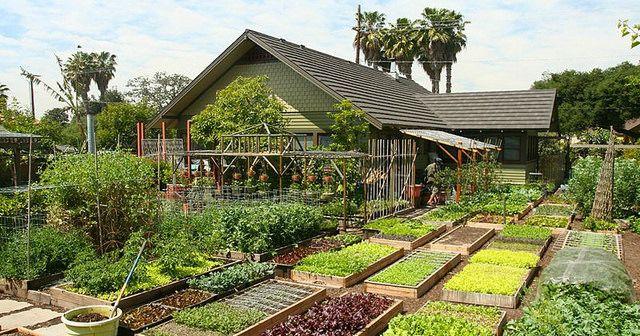 Esta familia produce 2700 kg de comida anualmente en 370 mts2