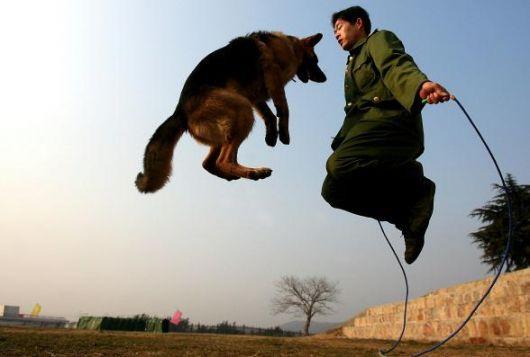 Un soldato cinese allena un cane a Nanjing