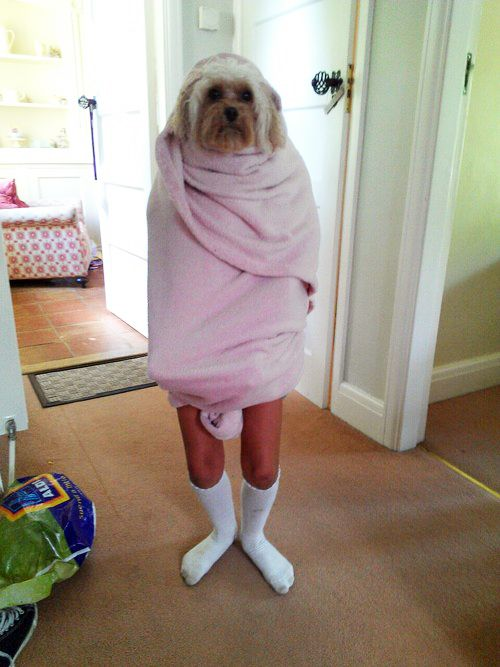 no make upAnimal Pictures, Beds, Funny Pictures, Shower, Funny Photos, Funny Animal, So Funny, People, Dogs Funny