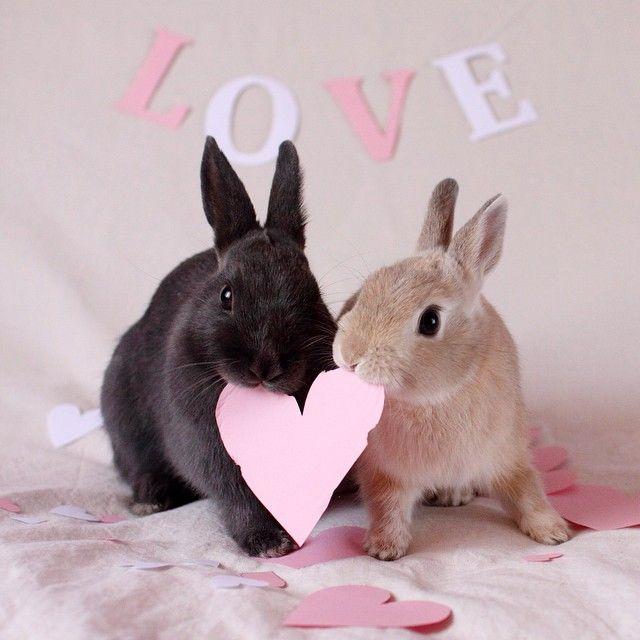 Поцелуй зайцев картинки
