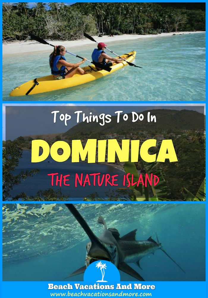 Top things to do in Dominica on vacation - Dolphin & Whale Watching, Safari, hiking trips, eco tours, kayaking, river tubing and more fun activities
