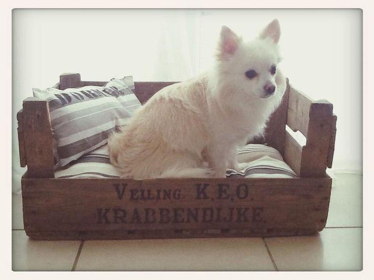 panier pour chien fabriqu en caisse lit danzka. Black Bedroom Furniture Sets. Home Design Ideas