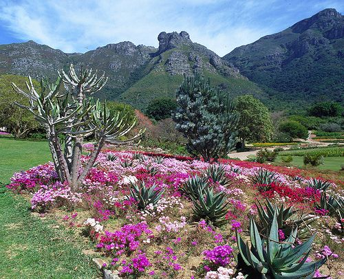 Kirstenbosch Gardens - South Africa