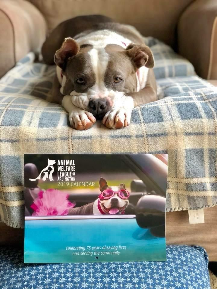 My Friends Rescue Dog Dory Won The Shelters Fundraising Contest And Became A Model Https Ift Tt 2cvalrx Rescue Dogs Cute Animals Animals