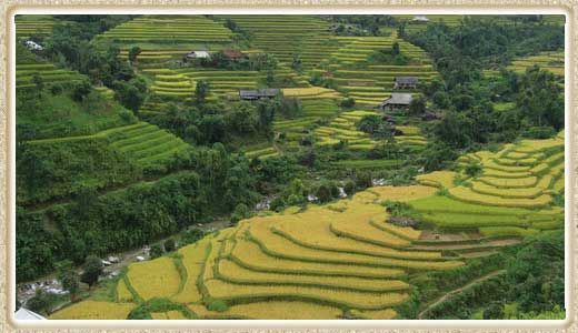 Are you thinking about a tailor-made trip to Vietnam? We are specialized in providing travel service for personal needs. Visit our site to see tours and send your specific request.