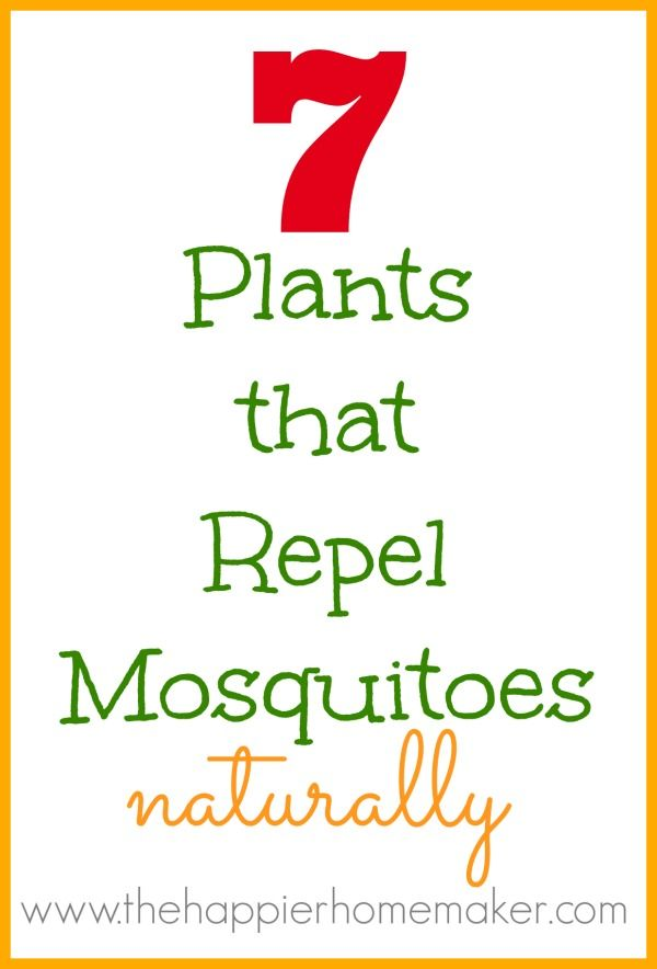 7 plants repel mosquitoes