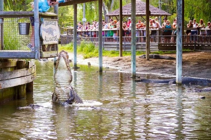 Alligator Adventure: Myrtle Beach Attractions Review - 10Best Experts and Tourist Reviews