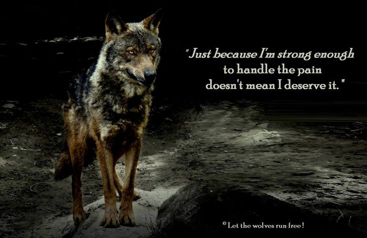 LET THE WOLVES RUN FREE....F/B page