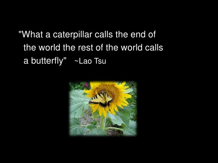 quot;What a caterpillar calls the end of  the world the rest of the world calls  a butterflyquot; ~Lao Tsu