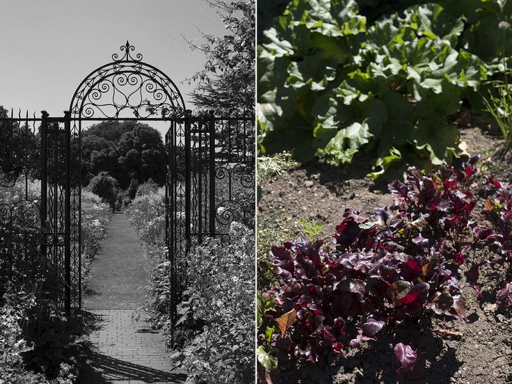 Helmingham Hall Gardens | Aesme Flowers