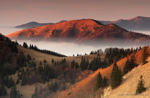 Red hills in autumn. Greater Fatra, Slovakia.  www.simplycarpathians.com