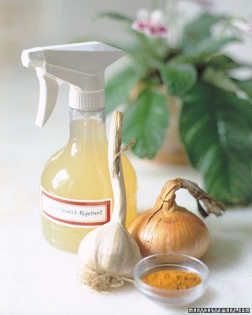 Spray de plagas casero: Mantenga las babosas y los pulgones lejos de sus macetas con un spray casero no químico. Coloque una cebolla pelada, dos dientes de ajo pelados y una cucharadita de pimienta de cayena en la jarra de la licuadora. Agregue tres tazas de agua, y mezclar hasta que quede suave. Deja reposar la mezcla durante la noche, colar el líquido en una botella de spray, y rocie  las plantas con una capa generosa. La solución se conserva, refrigerada en la botella, hasta por una…