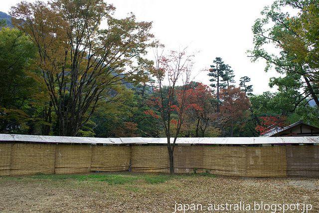 Koyo in Gifu Park