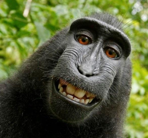 Autoscatti scimmieschi