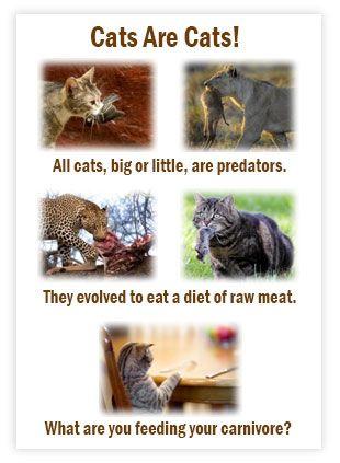 Cat Raw Food Diet And Ibd