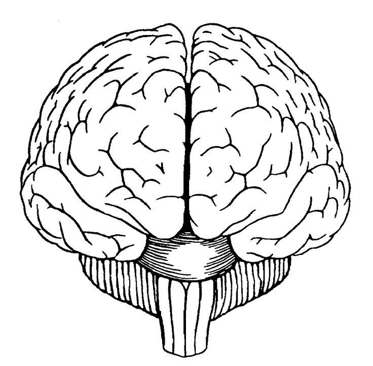 Brain Diagram Front View