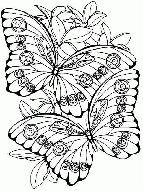 coloring page Butterflies