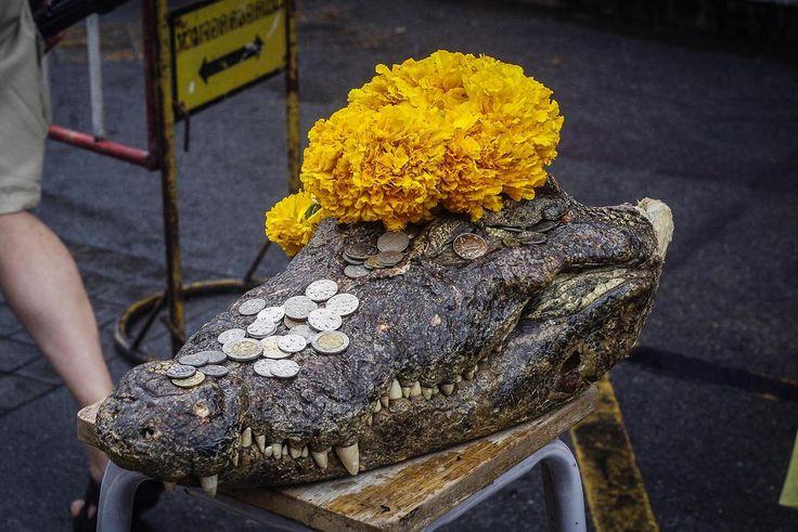 Więcej krokodyli na markecie na http://kursnawschod.pl/