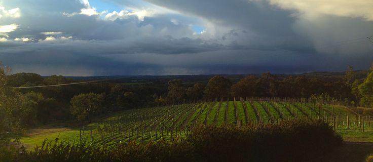 The Vineyard – Virago