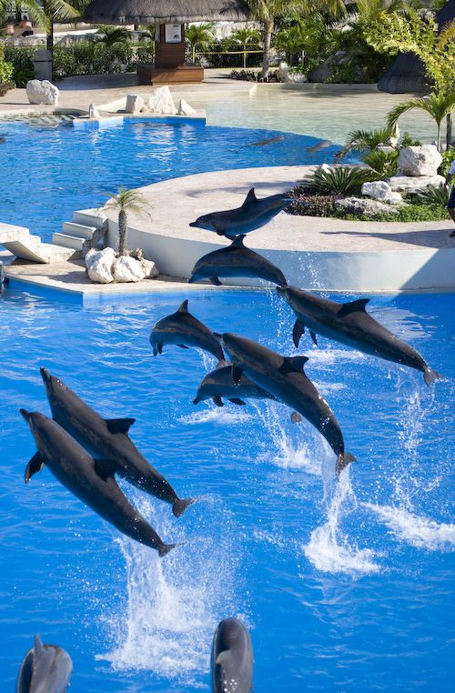 Dolphinaris Cancun, Isla Mujeres