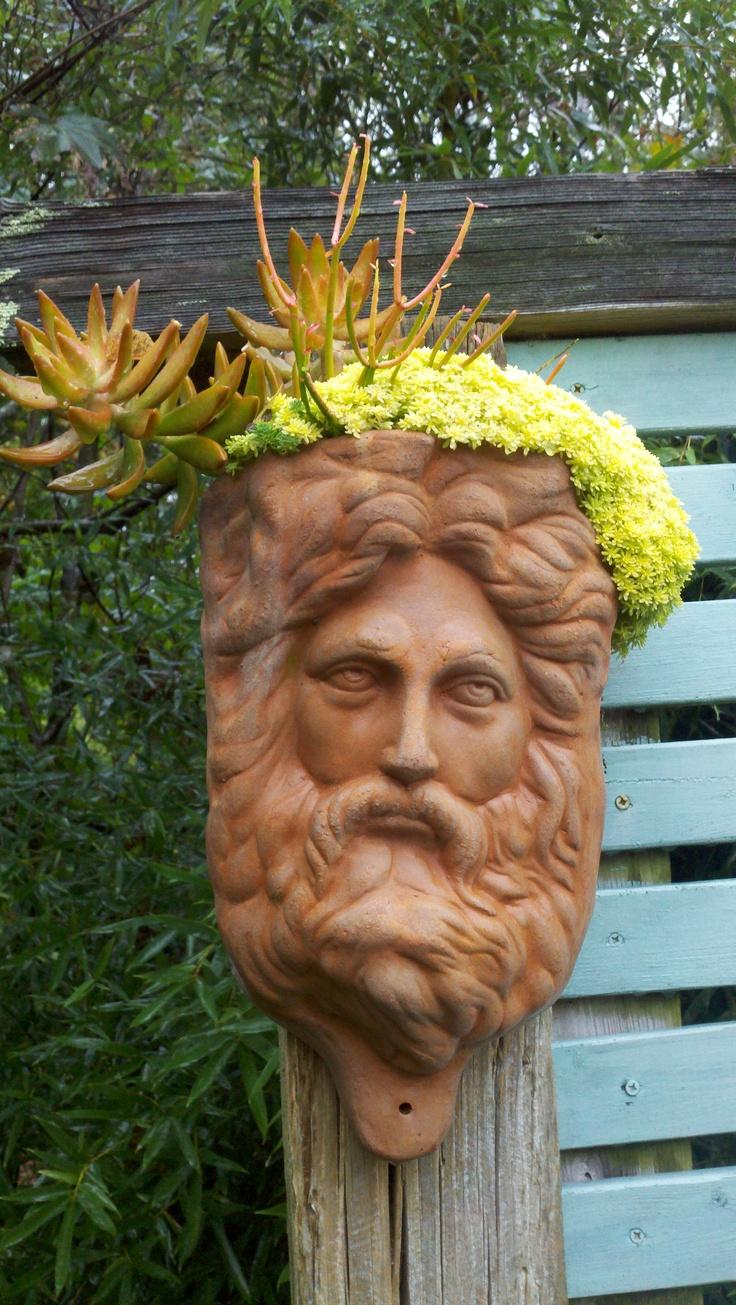 Zeus With Succulents