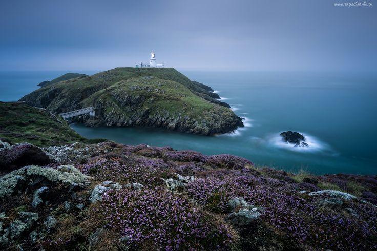 Park, Narodowy, Pembrokeshire Coast, Wybrzeże, Latarnia, Morska, Wrzosy, Walia, Wielka, Brytania